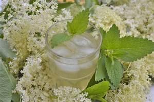 Rezept Für Holunderblütensirup : einfacher holunderbl tensirup rezept ~ Lizthompson.info Haus und Dekorationen