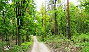 Bilder Vom Wald : wald berlin klima die ausstellung im wald land berlin ~ Yasmunasinghe.com Haus und Dekorationen