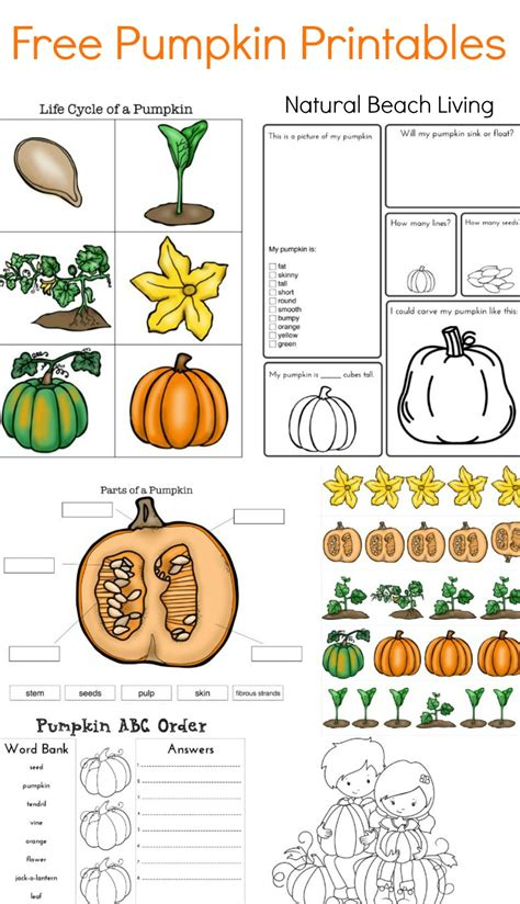 preschool pumpkin printables the best pumpkin activities for stem 254