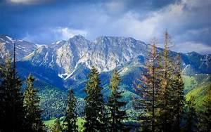Nature, Landscape, Mountain, Forest, Carpathians, Trees