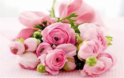 Roses Pink Rose Wallpapers Morning 1080p Landscape