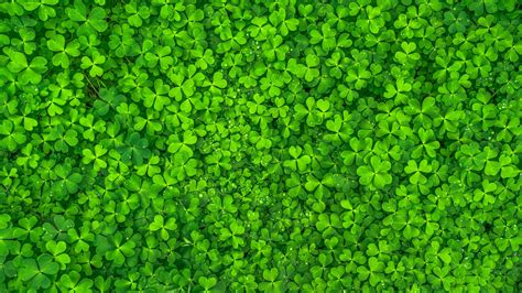 Wallpaper Clovers, Green Leaves, Hd, Nature, #7612. Kitchen Tiles Red. Under Sink Kitchen Organizer. Discount Modern Kitchen Cabinets. Country Cottage Kitchen Design. Modern Kitchen Tools. Country Apple Decorations For Kitchen. Modern Kitchen Unit. Country Kitchen Store