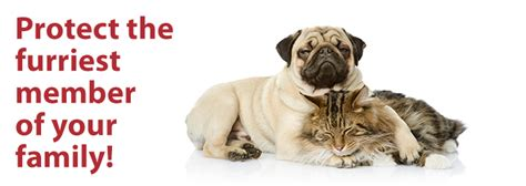14,593 likes · 42 talking about this · 136 were here. Pet Insurance - Discount Insurance