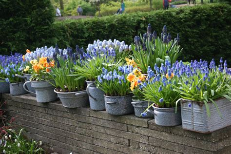 Bulb Garden by Growing Bulbs In Outdoor Containers Garden Bulb