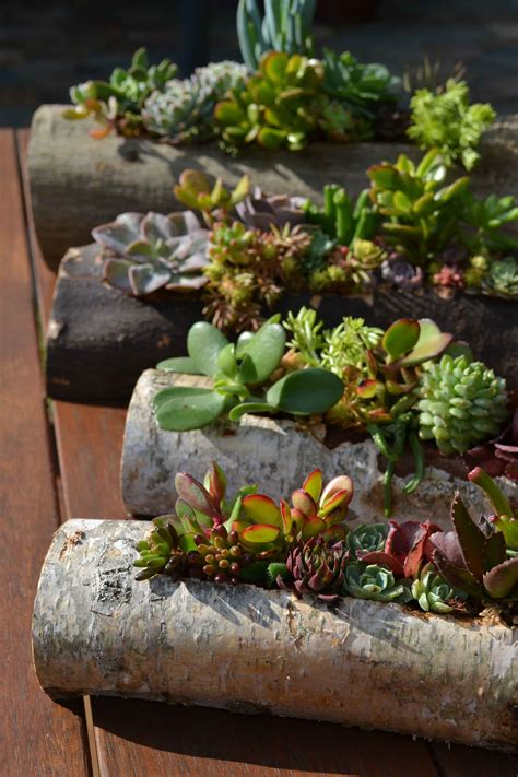 succulent log table arrangements vertical walls garden