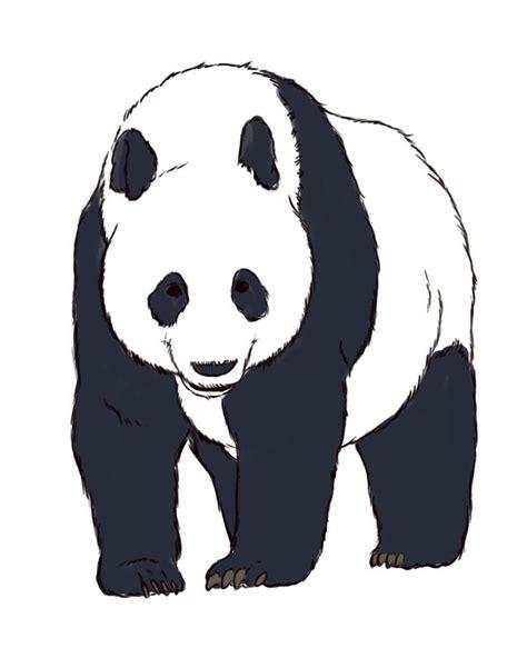 How to Draw Realistic Panda Bears   Panda sketch, Panda ...