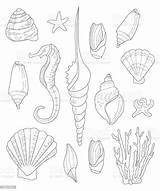 Coloring Shells Adults Drawn Shell Seashell Abstract Adult Sand Animal Markings sketch template