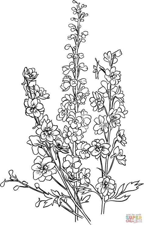 Delphinium | Super Coloring | Drawing Flowers 2