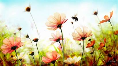 Summer Wallpapers Widescreen Flowers Definition Spring