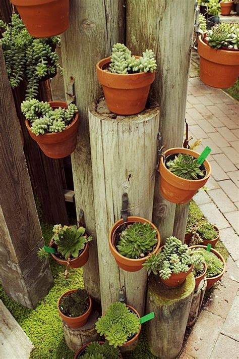 Best 25+ Cheap Plant Pots Ideas On Pinterest Cheap