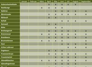 Welche Kräuter Passen Zusammen Tabelle : h ufig gestellte fragen zu smoothies smoothie ~ Frokenaadalensverden.com Haus und Dekorationen