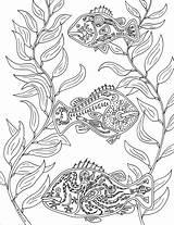 Kelp Forest Drawing Coloring Getdrawings sketch template
