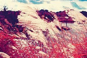 pink scenery on Tumblr