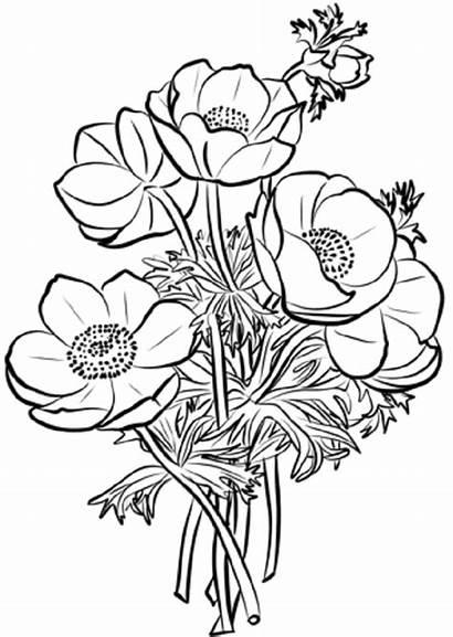 Colorear Flores Dibujos Pintar Imagenes Imprimir Dibujar
