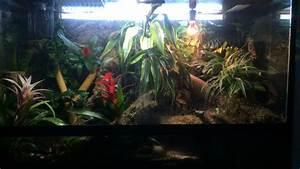 Bioactive Giant Day Gecko (Phelsuma Grandis) naturalistic ...