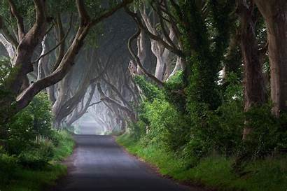 Ireland Tree Fog Road Bush Nature Trunks