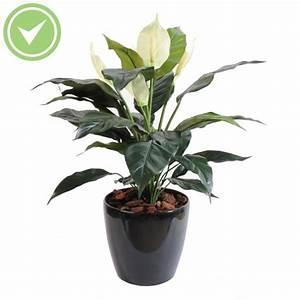 Plante D Intérieur Pas Cher : plante verte interieur pas cher ~ Dailycaller-alerts.com Idées de Décoration