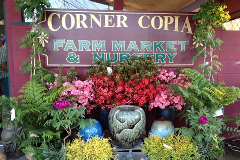 corner copia garden center nursery farmingdale