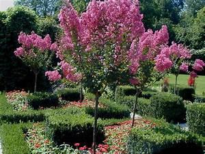 Petit Arbuste Fleuri : fleur arbuste fleur exotique rouge et jaune maison ~ Premium-room.com Idées de Décoration