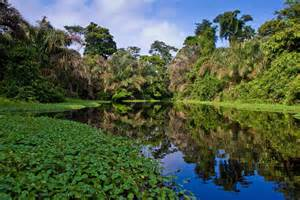 Amazon Rainforest Brazil Tours