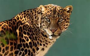 Jaguar Wallpaper Hd 3840x2400