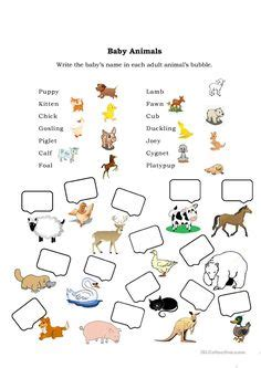 baby animals names worksheet free primary animal worksheets worksheet baby animals