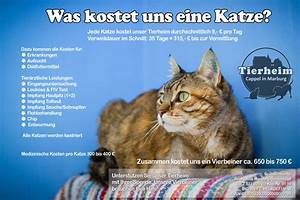 Was Kostet Eine Dachgaube : wie kann ich helfen tierheim cappel marburg ~ Lizthompson.info Haus und Dekorationen