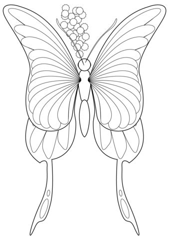 butterfly coloring page  printable coloring pages