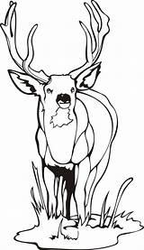 Coloring Pages Elk Printable Deer sketch template