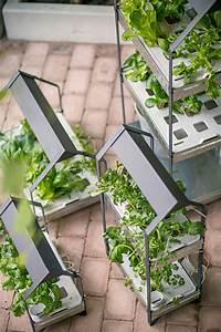 Pflanzen Bei Ikea : f r einen gr neren alltag neues hydrokultursystem von ~ Watch28wear.com Haus und Dekorationen