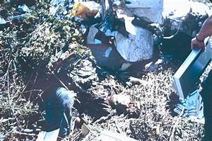 Pin Aaliyah Plane Crash Pictures Image Search Results on ...