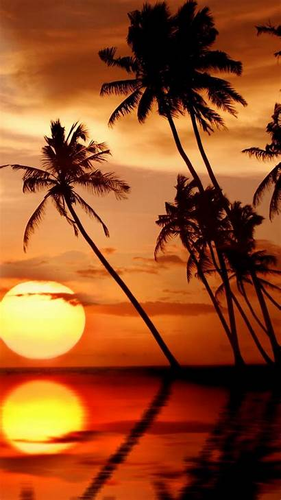 Sunset Beach Palm Trees Iphone Wallpapers Sea