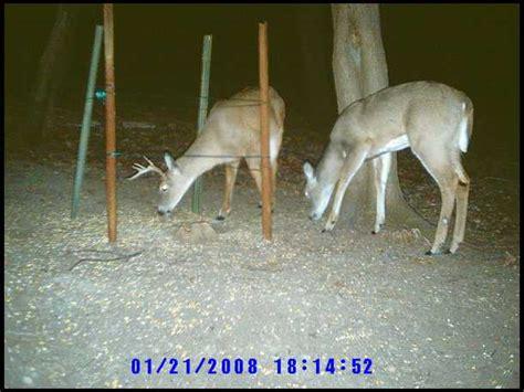 deer antler shed catcher riache richwood plans shed antler catcher