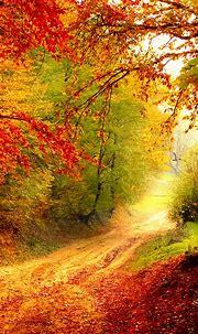 Free HD Autumn Bend Phone Wallpaper...6526