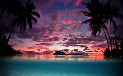 Sunset Palm Tropical Tahiti Trees Island Landscape