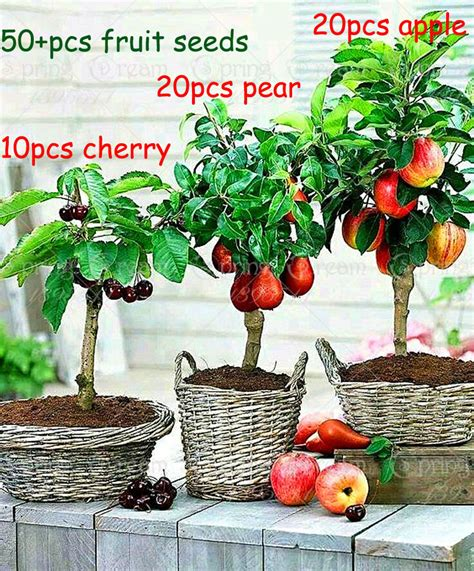 Online Buy Wholesale Fruit Trees Pear From China Fruit