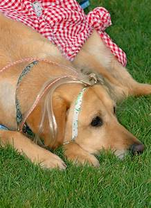 how to groom a dog at home your complete guide free With dog grooming at home