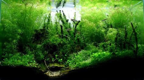 Bamboo Aquascape by Aquariums Smogon Forums