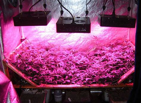 led grow light reviews best led grow lights detailed reviews
