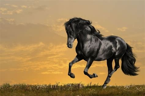 free horse images free stock photos download 708 free
