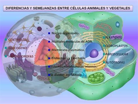 baixar diagrama de celula vegetal y animal