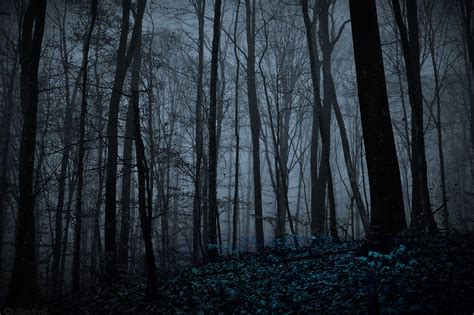 Forest At Night Hd Wallpaper, Background Image