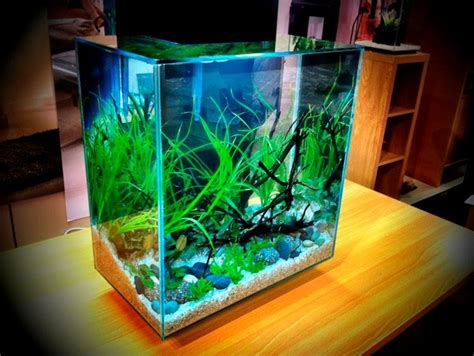 Fluval Edge Aquascape by Fluval Edge 2 12 Gallon Size New Aquarium By Hagen