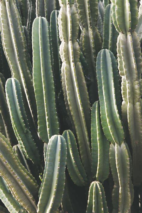 southwest cactus  catherine mcdonald artfully walls