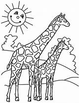 Coloring Pages Giraffes Print sketch template