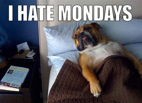 I Hate Mondays Meme - funny mondays jokes memes pictures