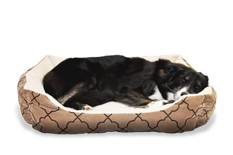 Cat Beds Petco by Heated Beds Petco Bed Shoo For