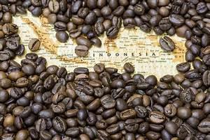 Kopi Luwak Zubereitung : teuerste kaffee der welt schon probiert ~ Eleganceandgraceweddings.com Haus und Dekorationen