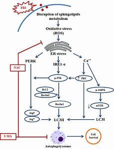 Schematic Representation Of Detailed Molecular Mechanism