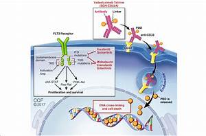 Promising Cell Surface Targets In Acute Myeloid Leukemia